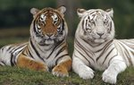 Animals Mix Wallpapers: Picture 215416