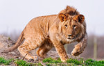 Animals Mix Wallpapers: Picture 441717