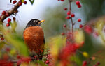 Birds Wallpapers: Picture 379684