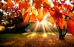 Fall Wallpapers: Picture 359142