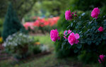 Flowers and Gardens Wallpapers: Picture 512318