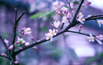 Flowers and Gardens Wallpapers: Picture 423021