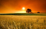 Nature Wallpapers: Picture 214680